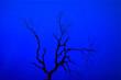 Leinwanddruck Bild - Autumn tree Photography with a romantic night view