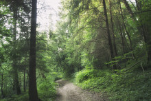The Road Through The Mysterious Russian Forest