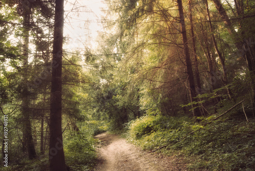 Fototapeten Wald The road through the mysterious Russian forest