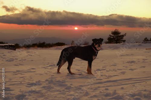 Fényképezés  Dog On The Snow At The Sunset