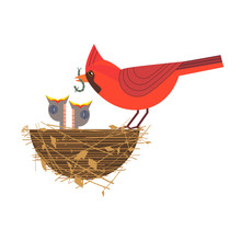 Nothern Red Cardinal Feeding B...