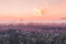 Sunrise Field Of Blooming Pink...