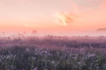 Panel Szklany Podświetlane Do biura sunrise field of blooming pink meadow flowers