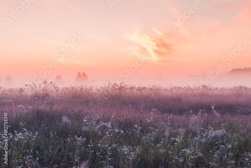 Poster de jardin Pres, Marais sunrise field of blooming pink meadow flowers