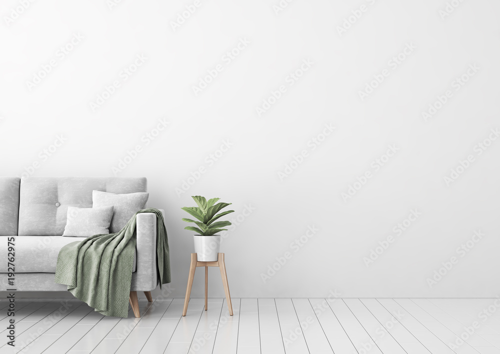 Fototapety, obrazy: Living room interior with gray velvet sofa, pillows, green plaid, lamp and fiddle leaf tree in wicker basket on white wall background. 3D rendering.