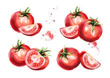 Ripe Tomatoes Set. Watercolor ...