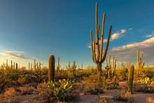 Landscape At Saguaro National ...