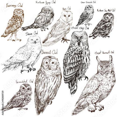 Tuinposter Uilen cartoon Illustration drawing style of owl birds collection