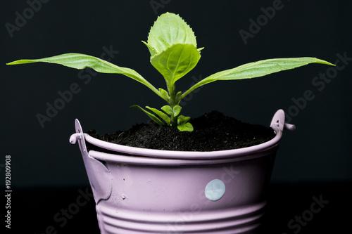 Obraz pembe saksıda büyüyen küçük bitki - fototapety do salonu
