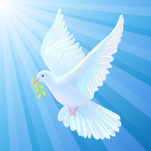 White Dove Is The Symbol Of A ...