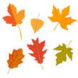 autumn leaves set, isolated on white background