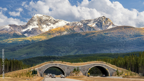 Photo Autumn - Wildlife Overpass on Trans Canada Highway in Banff National Park