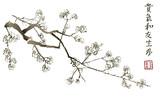 Gałąź kwitnąca sakura. Japońskie drzewo wiśniowe - 192842591