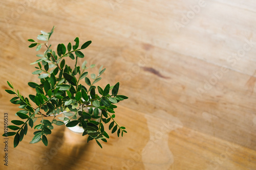 Fotobehang Bonsai Little green branch of tree in the vase on the table.