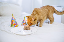 Cat Sniffs A Cake From The Cat Food For The Birthday Of A Cat On A Plate With A Hood And A Candle
