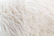 Close Up Wool Texture And Patt...