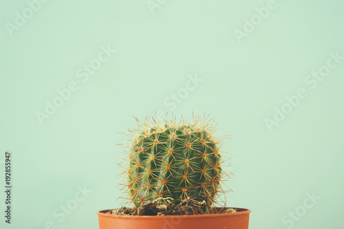 Image of cactus in a pot infront of wooden blue background.