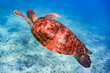 sea turtle dives in deep ocean