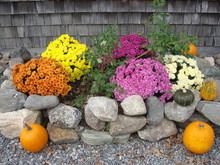 Fall Floral Display With Mums