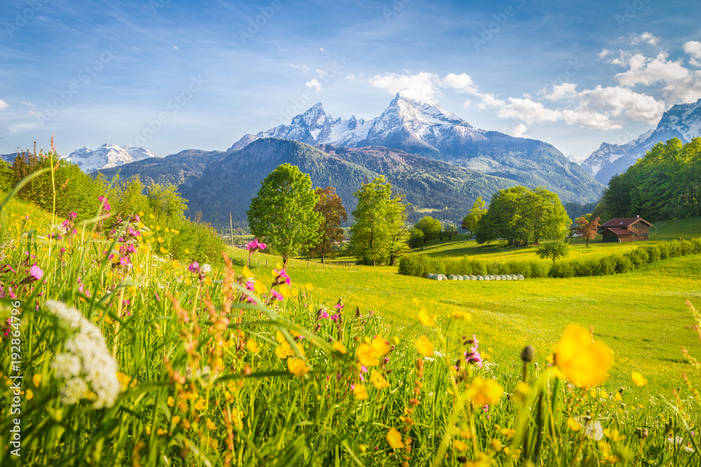 Fototapety, obrazy: Idyllic mountain scenery in the Alps with blooming meadows in springtime