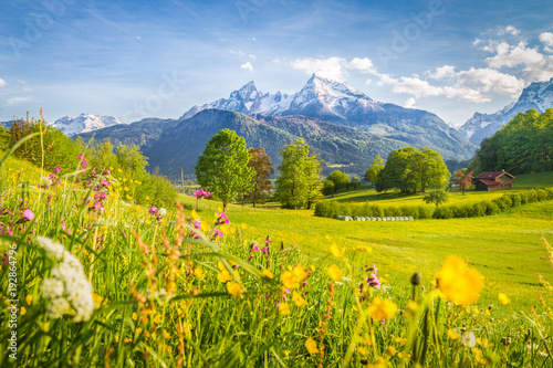 Fotobehang Pistache Idyllic mountain scenery in the Alps with blooming meadows in springtime