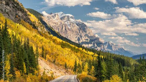 Obraz na płótnie Golden Aspen Jesienne kolory na Icefields Parkway - Park Narodowy Banff