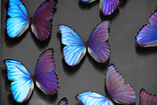 Purple Butterflies On A Gray Background