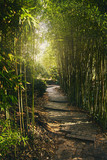 Fototapeta Bambus - A tunnel of green bamboo branches with soft light at the end. Passage in the park with steps from stone slabs. The sun's rays make their way through the bamboo branches.