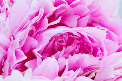 Foto op Canvas Bloemen Pink floral background