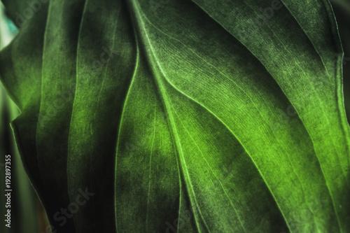 zielonej-rosliny-liscia-tekstura-makro-strzal-tle-przyrody-flora-wiosna