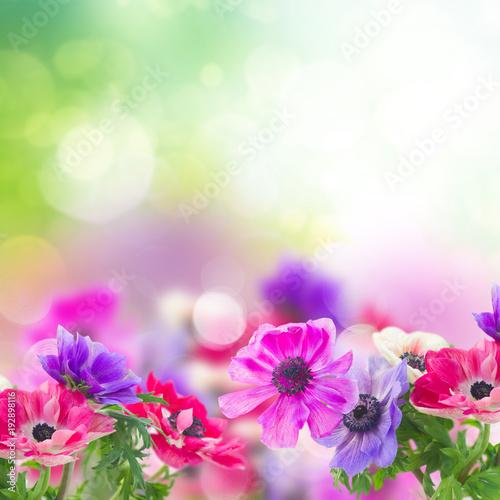 In de dag Bloemen anemone flowers in garden