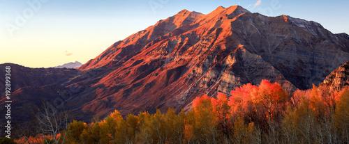 Deurstickers Landschappen Golden fall aspens with Mount Timpanogos, Utah, USA.