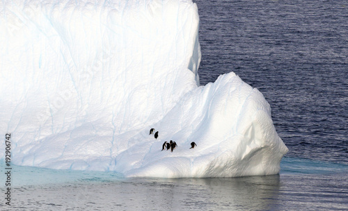 Foto op Canvas Antarctica Antarctica on a Sunny day- Antarctic Peninsula - Penguins on Huge Icebergs and blue sky