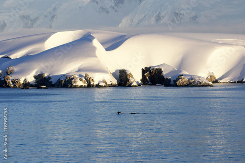 Staande foto Antarctica Antarctica on a Sunny day- Antarctic Peninsula - Sunset light, humpback whale swimming in foreground