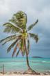 Palm Tree and San Andres Johnny Cay Island.