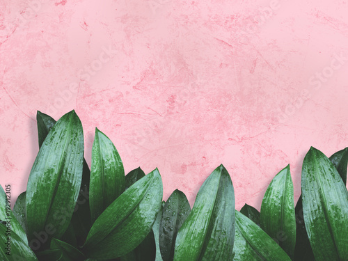 green leaves over pink grunge concrete wall.