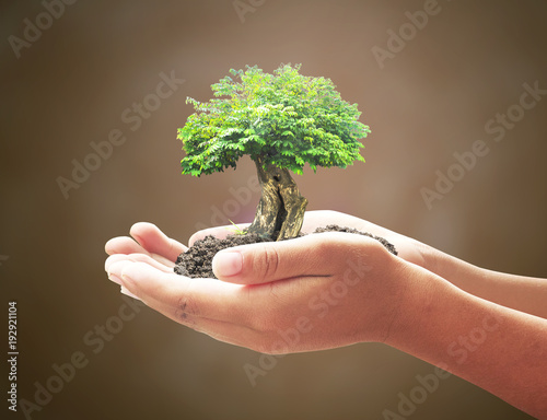 Photo World environment day concept: Human hands holding big tree over blurred world m