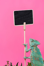 Cute Colorful Chameleon Near B...