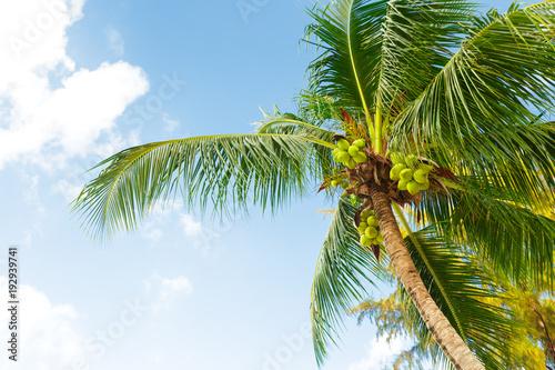 Spoed Foto op Canvas Natuur coconut palm tree on sky background