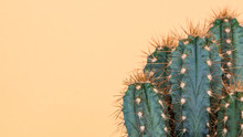 Cactus Plant Close Up. Trendy ...