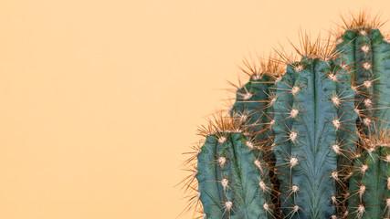 Biljka kaktusa izbliza. U trendu žuta minimalna pozadina s biljkom kaktusa.