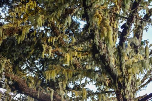 Keuken foto achterwand Canarische Eilanden Spain Gomera island fog forest bosque del cedro
