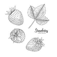 Hand Drawn Illustration Of Str...