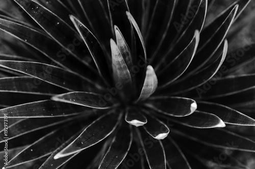 kaktusy-koncepcja-czarno-biala
