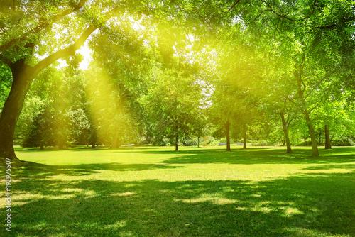 Obraz Sunrise in beautiful park - fototapety do salonu