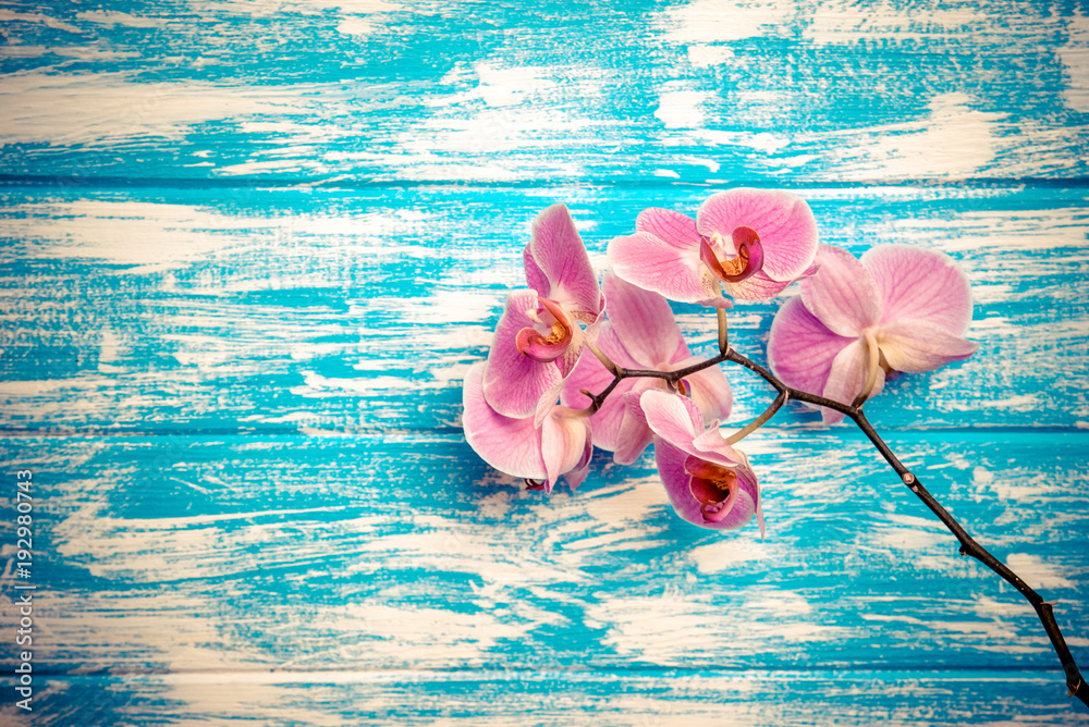 Fototapety, obrazy: Branch of a purple orchid lies on a blue wooden background