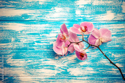 Obraz Branch of a purple orchid lies on a blue wooden background  - fototapety do salonu