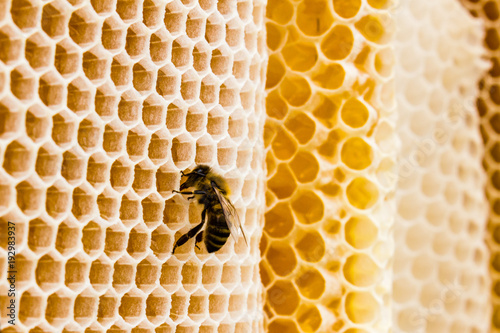 Poster Bee Biene auf Bienenwaben Nahaufnahme Makro