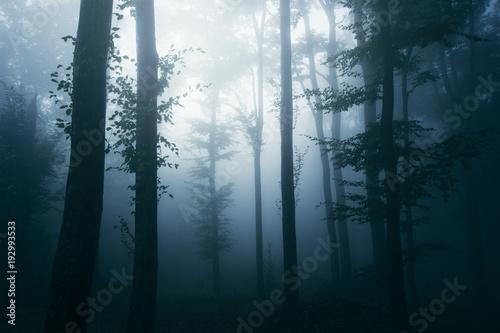 stare-drzewa-we-mgle-grafika