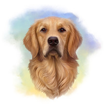 Illustration Of A Golden Retriever. Guide Dog, A Disability Assistance Dog. Watercolor Animal Collection: Dogs. Dog Pug Portrait - Hand Painted Illustration Of Pet. Good For Banner, T-shirt, Card.